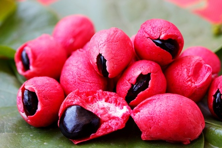 pulpy: Fleshy and pulpy Mexican origin fruit known as Camachile or Guamachil  Also known as Manila Tamarind in Philippines