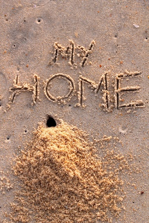 tunneling: Crab hole and a pile of sand with words my home on a beach Stock Photo