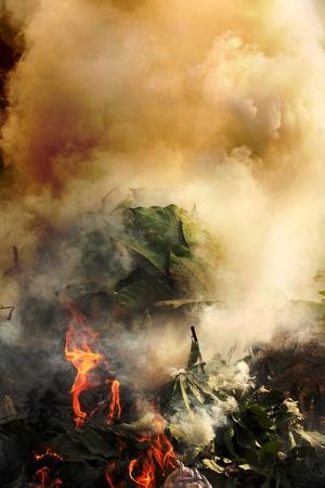 quemadura: Las plantas, de pl�stico y meterials peligrosas en los gases de emisi�n de fuego t�xicos y contaminantes poisoinous y el medio ambiente