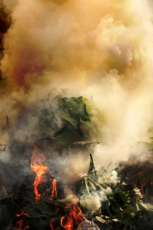 Plants, plastic and hazardous meterials on fire emitting toxic and poisoinous fumes and polluting environment