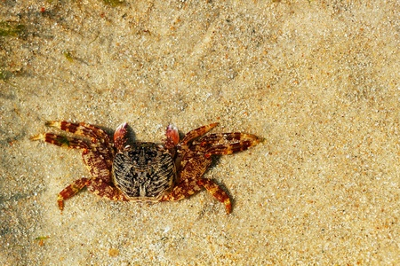 Beautiful orange colored crab resting on sand. Stock Photo - 12772872