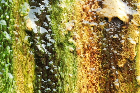 moistness: Algae growing on a wall completely covering its surface