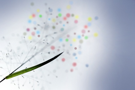 Abstract image with grass plant and colorful flowers in the background. Stock Photo - 13250050