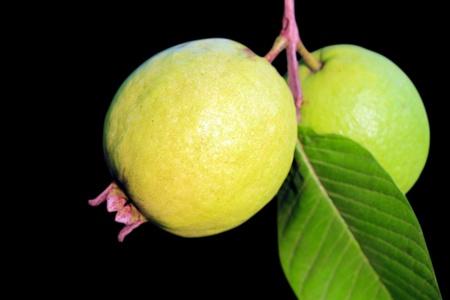 guayaba: Guayaba madura o la guayaba manzana (Psidium guajava) aislados en negro Foto de archivo