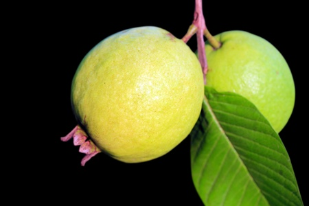 Ripe guava or apple guava(psidium guajava) isolated on black Stock Photo - 13504154
