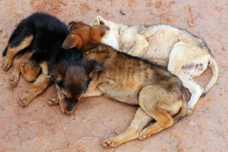 Three young street dogs huddling together and sleeping photo