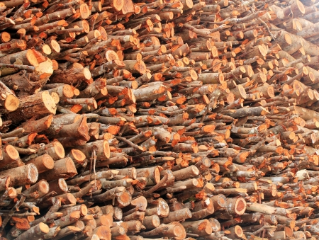 rampant: Logs of chopped wood piled for sale in a timber market in india. Deforestation is rampant in India Stock Photo