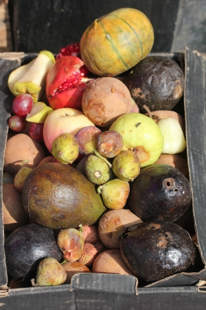 residuos organicos: Descomposición y la muerte en una caja de frutas como basura. Las frutas incluyen, manzana, aguacate, zapote, uva, etc