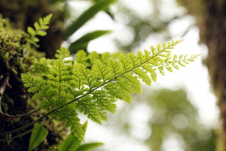 Beautiful lush tropical fern plant on a tree with bright green symmetrical leaves. This closeup macro photo of primitive herb was taken in evergreen tropical forests of western ghats in south India photo