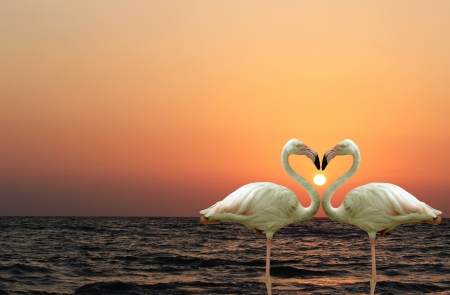 Beautiful and romantic flamingo couple