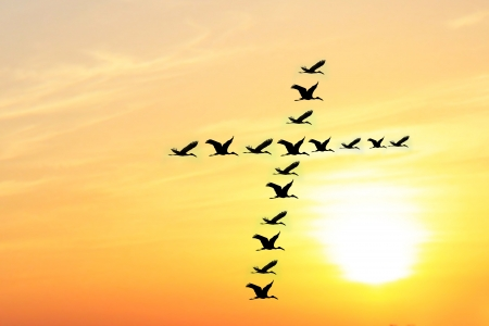 Beautiful   heavenly sky in the evening with birds forming holy cross shape as they fly together in unison   harmony  The evening sky is brightly lit by the setting sun photo