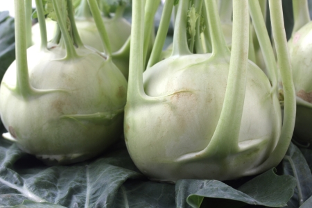 leafy: Fresh, organic, farm produce of kohlrabi(brassica oleracea) on leaves.