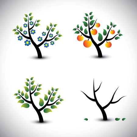 deciduous: Abstract tree in spring, summer, autumn & winter-vector graphic. The illustration represents four seasons and the tree in those seasons Illustration