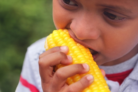 Hungry indian boy(kid) eating sweet corn(healthy food). This boy's photo is a close-up showing the person eating boiled maize vegetable on a summer day Stock Photo - 21622235
