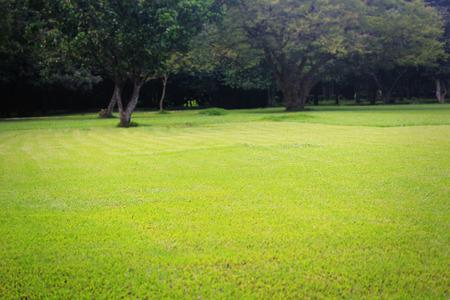 Beautiful bright green lawn & trees at lalbagh botanical gardens in bangalore, karnataka, india. photo