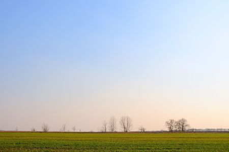 Wheat field in the early spring evening Stock Photo - 4651367