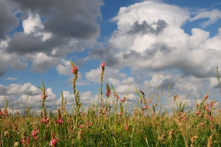 Blooming wildflowers against blue cloudy sky Stock Photo - 5049946