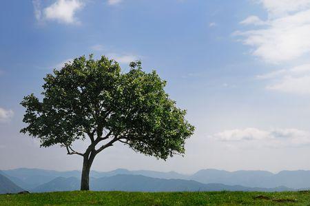 Één boom op de top van een berg tegen heldere blauwe hemel