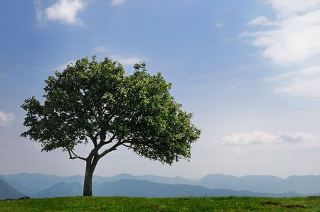 Single tree on the top of a mountain against bright blue sky