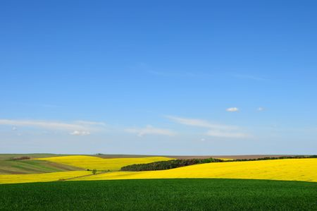 Green wheat and yellow rape fields against blue sky