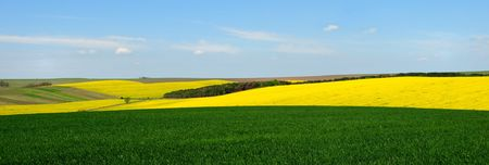 Landscape with yellow rape and green wheat fields against blue sky Stock Photo - 5806870