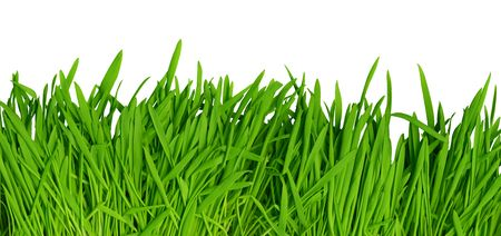 cm: Fresh green grass isolated on white background. High resolution image, can be printed as large as 140x65 cm with 300 dpi. Stock Photo
