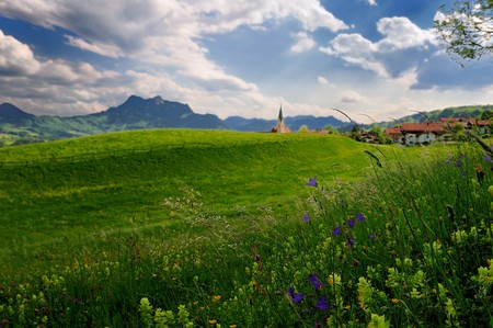 Rural scene of alpine meadow with mountains on the background. Focus is on the grass and flowers.