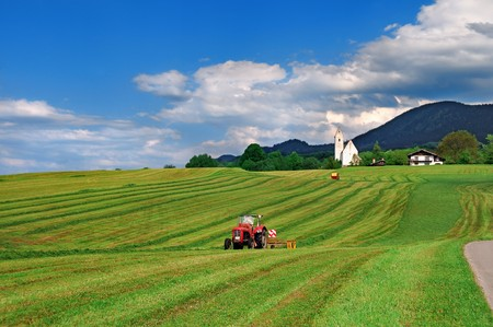 agricultural machinery: Tractor cutting hay in the field during beautiful sunny day