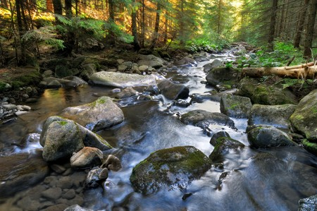 Beautiful serene landscape with mountain river in the forest taken in Ukrainian Carpathian mountains photo
