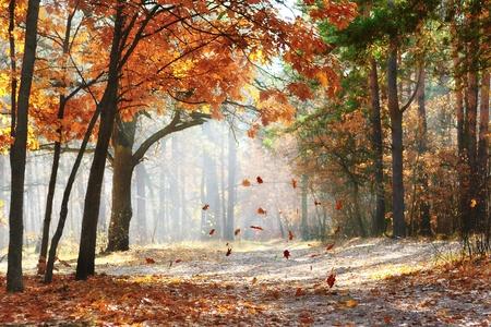 Vallende eiken bladeren op het schilderachtige herfstbos verlicht door ochtendzon Stockfoto