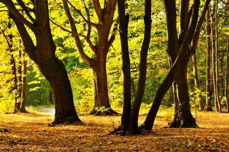 Beautiful scene in the park with trees illuminated by evening sun photo