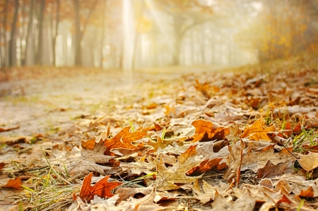 Dry oak leaves on the ground in a beautiful autumn forest photo
