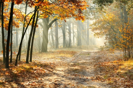 Beautiful morning in the misty autumn forest with sun rays  photo