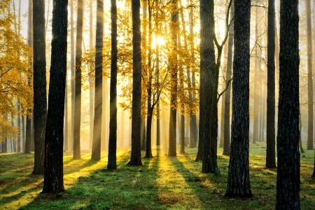 Mooie ochtend scène in het bos met zonnestralen en lange schaduwen