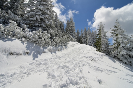 Winter landscape with spruce trees covered by snow and blue sky with clouds photo