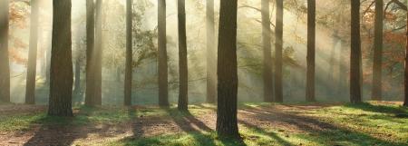 Panoramisch beeld van de ochtend het bos met een fantastisch zonnestralen Kan gebruikt worden als website header