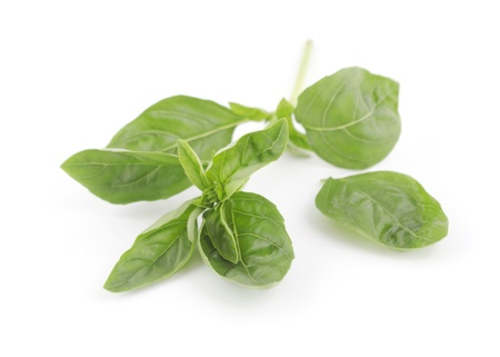 Branch of fresh green basil leaves on white background  Stock Photo - 17114171