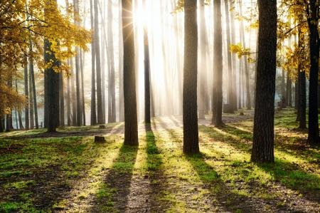 美しい風景、森の中の日の出
