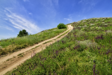Hill with road covered with summer flowers photo