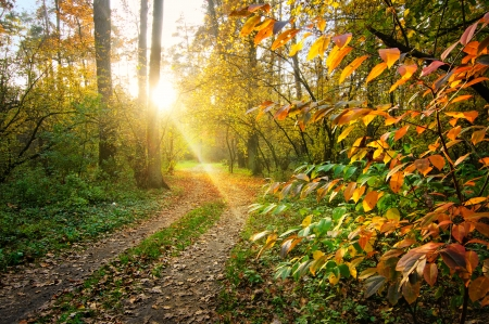 Autumn landscape with pathway in the forest on sunset