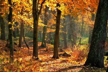 Fall landscape in the park with red and yellow leaves illuminated by sun