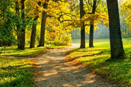 Beautiful October park with trail and bench surrounded by colorful trees illuminated by warm sun photo