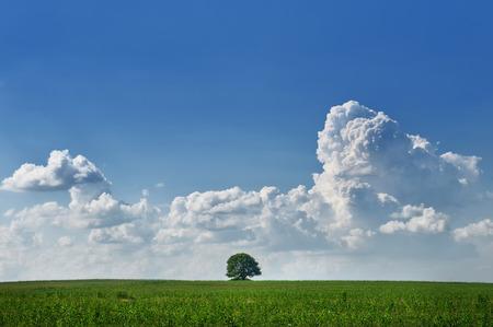 arboles frondosos: Paisaje con un árbol solitario en el medio de un campo con el cielo y las nubes de cúmulo Foto de archivo