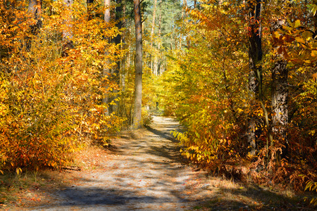 Dirt road in the colorful fall forest Stok Fotoğraf