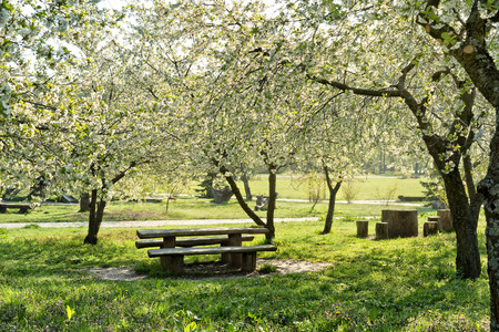 shady: Shady rest place in a blooming spring garden