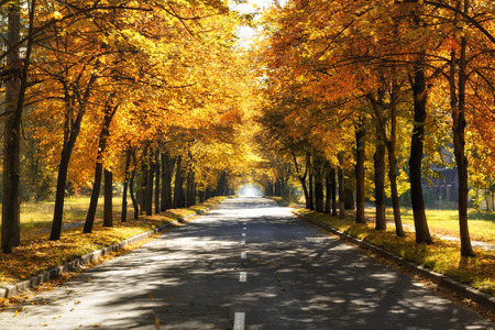 Road with tree lines of golden fall colors Stok Fotoğraf