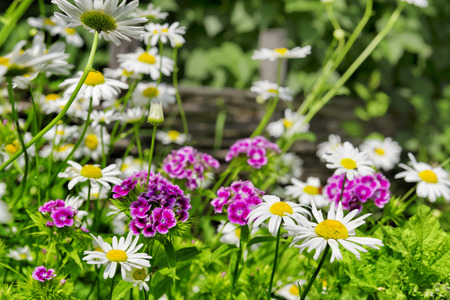 flowers garden: Beautiful flowers in a garden, a background