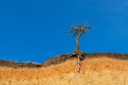 wav: Lonely dry tree on a cliff, against vivid blue sky