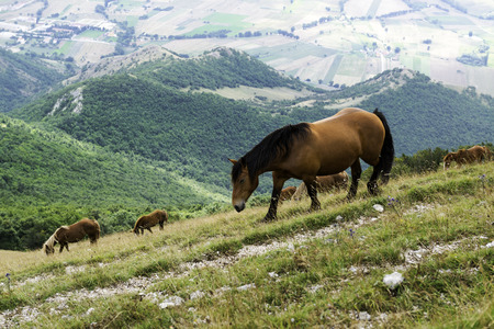 Wild horses in the pasture of a Monte Cucco national park, Italy Stock Photo