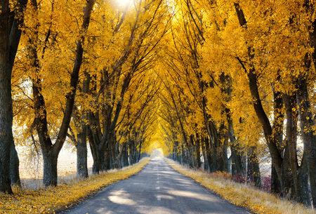Rural road lined with autumn colored trees Stock Photo